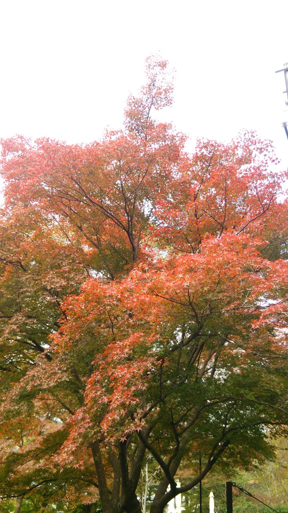 八瀬の紅葉