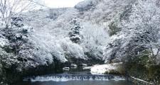 八瀬の雪化粧